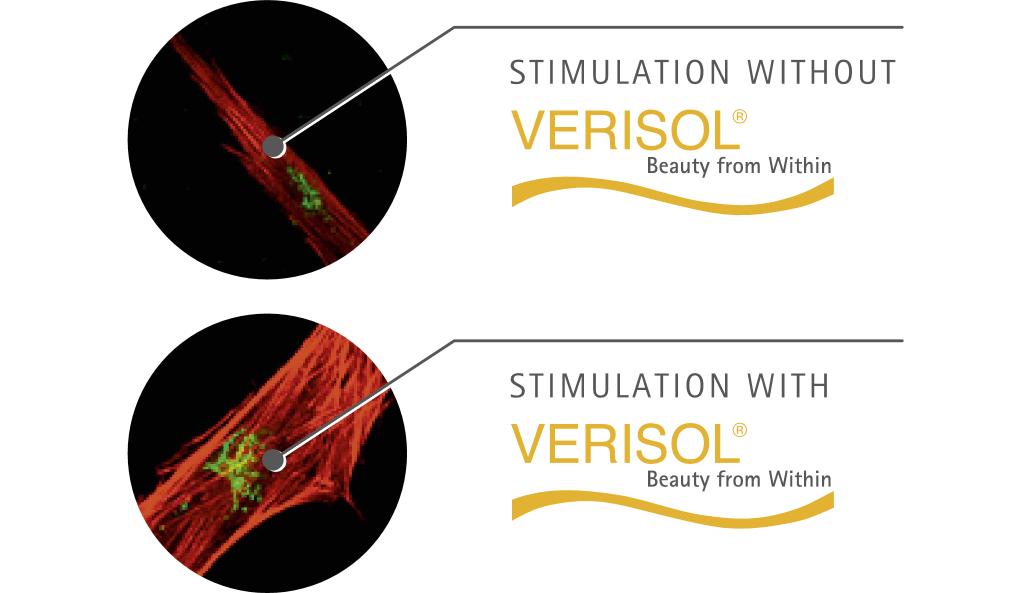 Verisol synteza in vitro