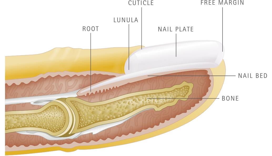 Verisol wzrost i zdrowie paznokci